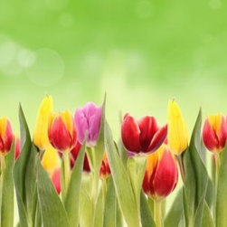 """Home Decor - Flowers Mega Panoramic Wall Decals, 115.8 X 26.4 X .125 - This gorgeous tulip wall art decal comes in 3 panels to create a giant Spring scenic. Lush tulip blossoms reach up cheerfully into an abstract green sky. Contains three 26.4"""" x 38.6"""" pieces. Imported from Italy."""