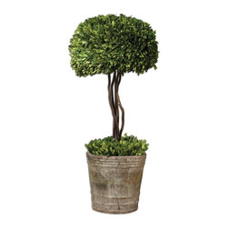 Constance Lael-Linyard - Constance Lael-Linyard Preserved Boxwood Tree Topiary X-59006 - Preserved while freshly picked, natural evergreen foliage looks and feels like living boxwood. Single topiary is potted in mossy stone finished terracotta planter.