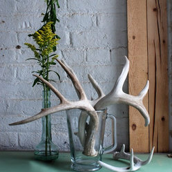 Single Naturally Shed Deer Antler