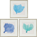 Paragon Decor - Sea Fan II Set of 3 Artwork - Coral imagery is double matted in white with classic silver finish molding.