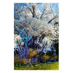 Spring in Bloom Photograph - Photograph with digital painting. Available on metal in editions of 200. The next available edition number will be shipped.