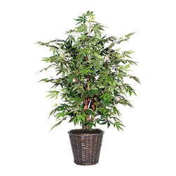 Vickerman - 4' Japanese Maple Extra Full - 4' Japanese Maple Extra Full Bush on three or more Dragonwood trunks. Dark brown Rattan container. American made excelsior