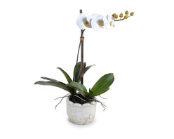 New Growth Designs - Single Phalaenopsis Orchid - Orchids add peaceful focus to any space you place them in, and this single stem beauty is full of elegant calm. With bright white petals and lovely green leaves, this potted orchid act as a palette cleanser for any style of decor.