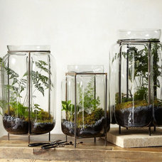 Contemporary Terrariums by West Elm