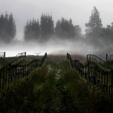 Morning Fog Rises from a Vineyard North of Sonoma, Calif. Photographic Print at