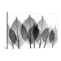 X-Ray Leaves II X-Ray Photography wall art from Great BIG Canvas by Albert Koets - X-Ray Leaves II X-Ray Photography wall art.  Available at www.GreatBigCanvas.com as a stretched canvas, framed print, print, or wall peel, in various sizes, by Albert Koetsier.