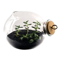 Esque - Xtra Terrarium - Cultivate a miniature garden on your desk, bureau or tabletop with this charming terrarium. Each piece comes with a vent hole and a cork stopper — all you need to add is soil, plants and an endless love of nature.