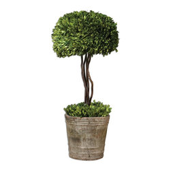 Uttermost - Uttermost Tree Topiary Preserved Boxwood 60095 - Preserved while�freshly�picked, natural evergreen foliage looks and feels like living boxwood.�Single�topiary is potted in mossystone�finished terracotta planter.