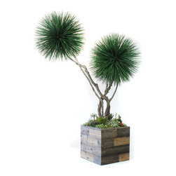 Dalmarko Designs - 8' Preserved Double Dracena Tree with Curvy Trunks and Succulent Garden - This exclusive Dracena Tree is from our preserved collection. Our Dracena tree is completely grown in California and handcrafted by our artisans with over 30 years of experience. Shown as is 8', Green, Double Dracena with Curvy Trunks, planted with succulent garden in reclaimed wood look planter.