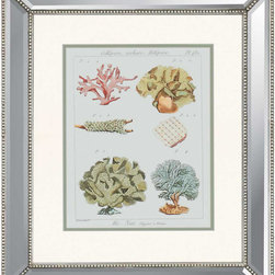 Paragon - Coral Classification II - Framed Art - Each product is custom made upon order so there might be small variations from the picture displayed. No two pieces are exactly alike.