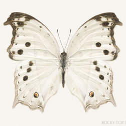 White Butterfly Print by Rocky Top Studio - Every office and guest room should have something pretty in it.