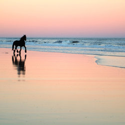 Murals Your Way - Friesian Beach Wall Art - Known for a brisk, high-stepping trot, the large yet graceful Friesian horse has a black coat and a long, thick mane and tail