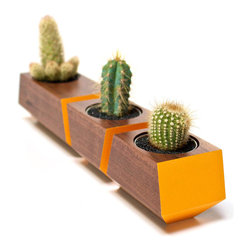 Revolution Design House - Boxcar Set Walnut and Orange - Walnut Boxcar succulent planter set with a clear finish and a pop of orange accents. Nest the set of planters together along a window sill or as a centerpiece on a table or desk.
