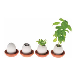 Eggling Crack 'n' Grow - These porcelain eggs are such a great idea! Just break the shell and wait for your little plant to sprout.