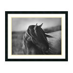 """Amanti Art - """"Fierce Grace"""" Framed Print by Tony Stromberg - Let yourself gallop along the windswept steppes. This black and white photo captures the free spirit of a proud and beautiful animal. In your home, it will bring the essence of the wild to your walls."""