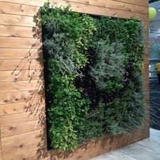 Modern  Eco Walls