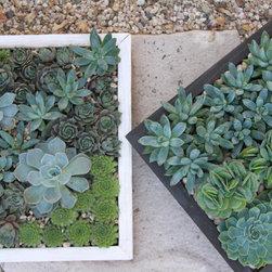 Succulent arrangements -