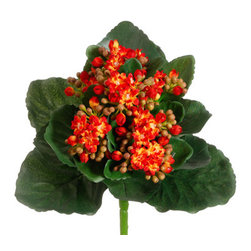 Silk Plants Direct - Silk Plants Direct Kalanchoe Bush (Pack of 12) - Orange - Silk Plants Direct specializes in manufacturing, design and supply of the most life-like, premium quality artificial plants, trees, flowers, arrangements, topiaries and containers for home, office and commercial use. Our Kalanchoe Bush includes the following: