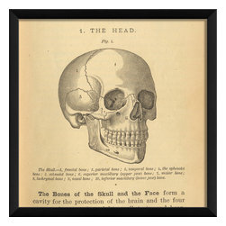 The Artwork Factory - 'LF Physiology Skull' Print - Grab some head lines. This antique diagram carefully delineates previously unknown areas of the scull for your edification. And while all that may not be news to you, you might like to know that this museum quality print is created on fade-resistant, acid-free paper, so it's one story that will never get old.
