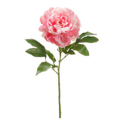Silk Plants Direct - Silk Plants Direct Peony (Pack of 12) - Pink - Pack of 12. Silk Plants Direct specializes in manufacturing, design and supply of the most life-like, premium quality artificial plants, trees, flowers, arrangements, topiaries and containers for home, office and commercial use. Our Peony includes the following: