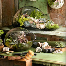 Terrariums by Forma Living
