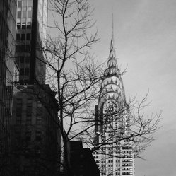 Steel Tree - Start spreading the news because this limited edition print of New York's iconic Chrysler building will not last long. This striking black and white piece fits in perfectly with your contemporary living room or office decor.