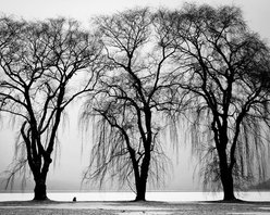 WCC - Autumn Trees Black&White High Resolution Photo 20''x30'' Printed on Canvas - High quality 0.56 mm thick 400 gsm cotton canvas.