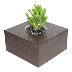 "MODgreen - Crassula - 5"" Exotic Hardwood Potted Cactus and Succulents - This Wenge planter (Milletia laurentii) has traveled all the way from Western Africa to become part of your collection. The beautiful dark colored and wavy pattern exudes elegance and style. Also pay attention to the little white streaks embedded in the grain which make it look even more attractive and unique. We have planted a popular compact crassula 'Gollum' to give you a nice elegant and modern look. Place indoors under bright light. Water only twice a month and avoid spilling when watering. Tung oil or beeswax will help extend the lifespan of your planter and maintain a shiny look."