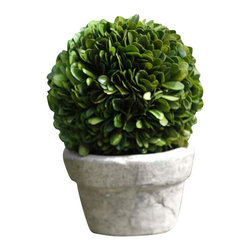 Boxwood Potted Ball Topiary, 6.75 X 4.75 - Bring the freshness of a classic shrubbery choice to your home with the Boxwood Potted Ball Topiary, a sphere of expertly-preserved leaves in a pale concrete pot that brings a manorial impression to centerpieces, front steps, and garden tables.  With a natural look, feel, and deep color, this small potted plant is easy to care for and presents a cultured, cultivated appearance.