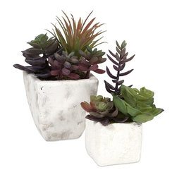 """IMAX - Wolek Potted Succulents - Set of 2 - This set ofeetwo cement planters with subtle antiqued texture are filled with faux succulents to stay perfectly fresh year round without the work. Rich plum tones subtly accent the greens to make this the perfect set for any table top. Item Dimensions: (10""""h x 7""""w x 7"""")"""