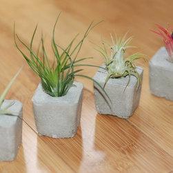 Handmade Concrete Planters -