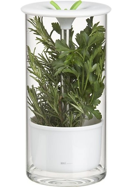 Contemporary Indoor Pots And Planters by Crate&Barrel