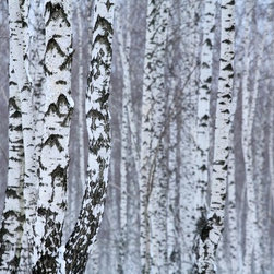 Wallmonkeys Wall Decals - Birch Wood in Winter Wall Mural - 18 Inches W x 12 Inches H - Easy to apply - simply peel and stick!