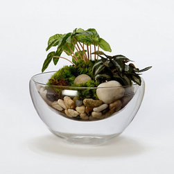 Floating Sand Bowl - This is a great terrarium setup for the bathroom shelf. It's simple to create and easy to maintain.