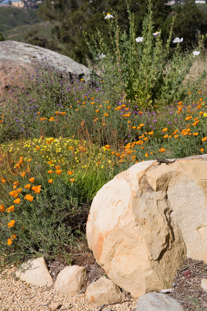 Fall planting: California's state flower offers a glorious spring ...