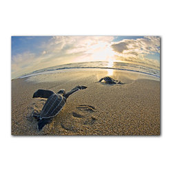 "READY2HANGART.COM - Ready2hangart Christopher Doherty Photography 'Leatherback' Canvas Wall Art - Renowned photographer Christopher Doherty, takes you on adventures under and above water through his imagery. This photograph is offered as part of a limited ""Home Decor"" line, being the perfect addition to any living or work space."