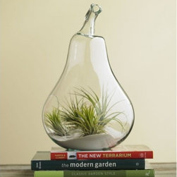 """Viva Terra - Pear Terrarium - Carefree and a source of fascinating  enjoyment for years to  come, our recycled glass  pear-shaped terrarium arrives  with sand and four air plants  requiring minimal maintenance.  Quickly and easily  assemble your own exquisite  miniature desert landscape. Or you may prefer to  order the pear on its own, as  a home to display found objet,  or as a vase for floating flowers. 9""""D x 14""""H"""