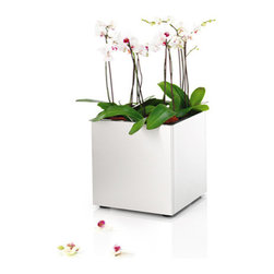 Blomus - Greens Cube, Small - The Greens Cube helps the modern plant-enthusiast to create an idyllic blend of cool design with the warmth of plant life. Its magnificent angles of brushed stainless steel provides a subtly elegant space for your greens to flourish.