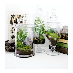 Garden Lovers Terrarium Gift Set in Apothecary Jars by Doodle Birdie - Terrariums are full of wonder. Like little worlds of their own, they are an excellent way to study life.