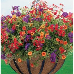 Black Round Coco Liner/Mild Steel English Flat Metal Hanging Basket - The English Flat Metal Hanging Basket has simplistic beauty inspired by English design. The sturdy flat strap design classic black finish and heavy 3-piece chain make this a versatile basket. Its coco liner keeps moisture and nutrients at the roots for lush blooms. Keep in mind that while lovely at first sight plastic planters deteriorate in the sunlight terracotta planters become dry and brittle wood planters can rot with age and some treated wood can be damaging to plants. Metal planters and hanging baskets will outperform the competition. The English Flat Metal Hanging Basket is like a talented supporting actor: an outstanding performer that allows the beauties of nature to take over the stage.About Woodstream and CobraCoA privately held company with a long-standing positive reputation Woodstream is a global manufacturer and marketer of quality products from pets and wildlife control and home and garden products to bird feeders and garden decor. They have a 150-year history of excellence growth and innovation and have built a strong presence in key markets through organic growth and strategic acquisitions. Most recently Woodstream acquired CobraCo which offers an extensive line of planters baskets flower boxes and accessories. The growth of Woodstream is thanks to their customer-driven approach to product development a dedicated design organization that focuses on innovation quality and safety as well as a commitment to an industry-leading level of service.