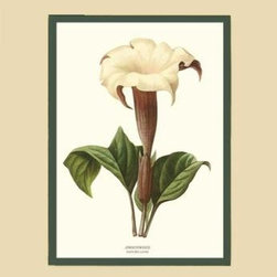 Jimsonweed Flower Botanical Print - 11x14 Print - 16x20 Cream/Green Mat - Vintage style botanical flower art print from turn of the 19th century illustrations.