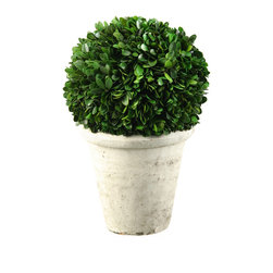 D&W Silks - 131017 D&W Silks Preserved Boxwood Ball Topiary in Stone Planter - With the look and feel of having just been brought in from the garden, this boxwood ball topiary rests in an antique stone reproduction planter and comes readily assembled to be used on any table top or shelf space. No watering or sunlight required, this piece will maintain it's color and shape for many years to come with only an occasional light dusting.