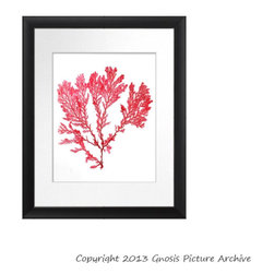 Vintage Seaweed Wall Decor Prints - www.etsy.com/shop/gnosispicturearchive