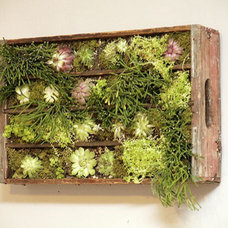 Modern  Soda Crate Wall Plantings