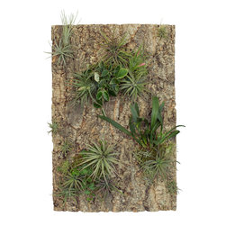 Cork Panels, 24in.x36in. - These panels are made from natural cork - perfect for mounting air plants, stag horn ferns and other epiphytes.  Made in Portugal.
