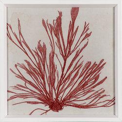 Brilliant Seaweed 9 - Vibrant red seaweed print framed in matte white beveled frame.