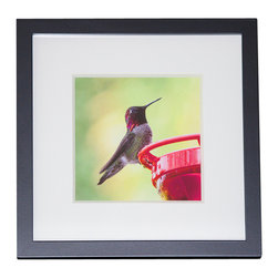 "Andrea Reider Photography - Hummingbird at Feeder After the Rain, 4"" x 6"" Print with 6"" x 8"" Black Frame - This hummingbird photograph is from my ""Broad-Winged Hummingbirds of West Hollywood"" series. The photos resulted mostly from a lot of patience and learning to ""think like a hummingbird."""