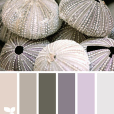 Design Seeds® | for all who ❤ color | urchin tones