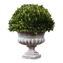 Uttermost Preserved Boxwood Garden Urn - Natural foliage that is freshly picked from real boxwood plants and carefully preserved to maintain its lush green color and natural texture, indelibly planted in a stony gray ceramic urn. Natural foliage that is freshly picked from real boxwood plants and carefully preserved to maintain its lush green color and natural texture, indelibly planted in a stony gray ceramic urn.