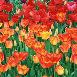 Walls 360, Inc. - Red Yellow Tulips Botanical Garden Buffalo Panoramic Fabric Wall Mural - Transform your empty walls with Walls 360's premium, repositionable wall graphics.